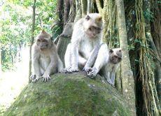 Visit Volcano, Ubud rice terrace and  Art Villages
