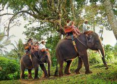 10% OFF  Go Elephant Trekking at Bali Elephant Camp