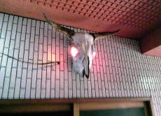 One day Ramen Tour in Tokyo
