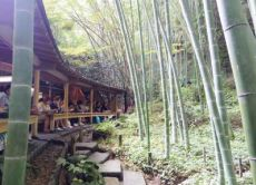 Refresh body and soul with yoga and a Kamakura tour