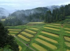Explore the rural Kadoide village and its sake traditions!
