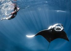 25% OFF Nusa Penida Snorkelling - Swim with The Manta Rays