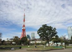 Take a Morning Walking Tour near Tokyo Tower for Early Birds