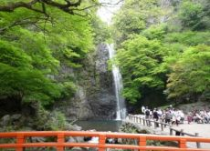 Take a half-day tour to Minoh Waterfalls and Katsuoji Temple