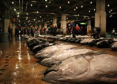 10% OFF See the Tuna Auction on a Tour in Tsukiji Market!