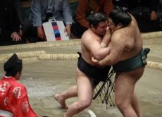 Last Chance Fight Day Tokyo Sumo Championship Tickets!