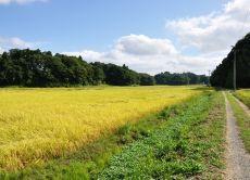 Inzai's Rural Village Vicinity Mountain Running/Walking Tour