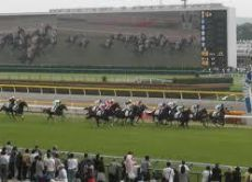 Watch an exciting Japanese horse racing near Osaka or Kyoto