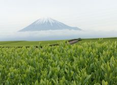 Take a Trip to the Outskirts of Mt Fuji in Shizuoka