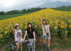 Enjoy Niseko Downhill Cycling Tour in Hokkaido