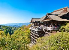 Exploring the Heart of Kyoto (Half Day)