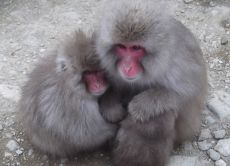 Go on a one day trip to see the Snow Monkeys!