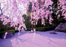 April: Zen Temple & Michelin restaurant reservation, Kyoto