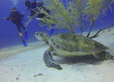 Bali Scuba Diving at the Best Dive Sites of Nusa Lembongan