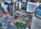 Explore Stylish Shops in Shibuya & Aoyama with a Local Guide