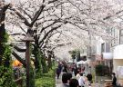 Chill with a local guide in Nakameguro, a hidden cozy area