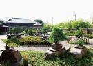 Best Japanese Bonsai Tour in Saitama Omiya Bonsai Village