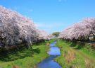 Visit Tokyo's best sakura (cherry blossom) spots!
