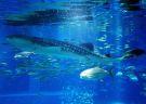 Interact with Sea Animals in Kamogawa Sea World, Chiba!