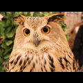 OWL CAFE WEST