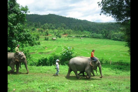 Experience traditional elephant riding with Mahouts - 0