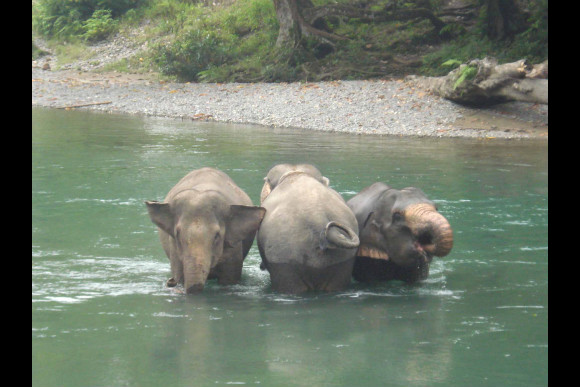Orangutan & Elephant Trek with Camping - 0