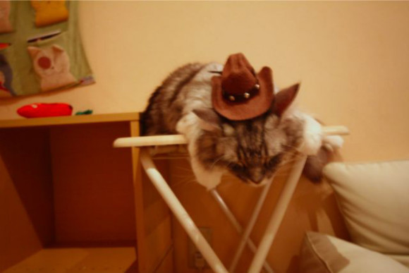 Cat Cafe: A Relaxing Time with Cats - 1