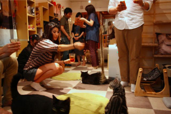 Cat Cafe: A Relaxing Time with Cats - 2