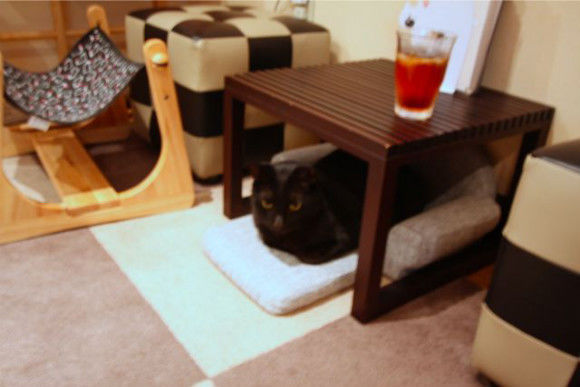 Cat Cafe: A Relaxing Time with Cats - 3
