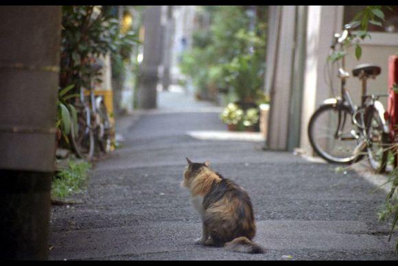 Ueno & Yanaka Walking Tour - 0