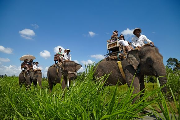 10% OFF  Go Elephant Trekking at Bali Elephant Camp - 0