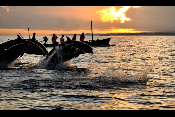 Visit Bali's wild dolphins and key sights in the north - 0