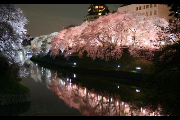 Sakura Night Illumination Tour - 0