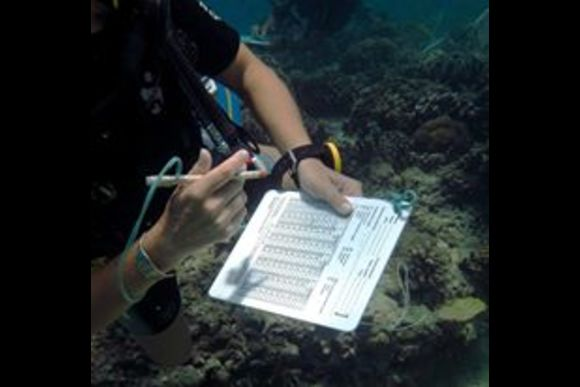 Learn to Save the Reefs on a 4 Day Eco Diver Course - 0