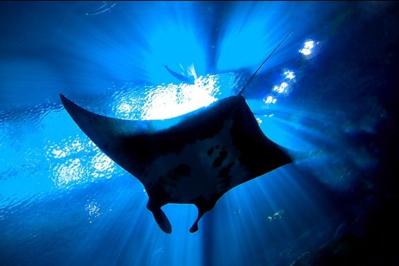 25% OFF Nusa Penida Snorkelling - Swim with The Manta Rays  - 0