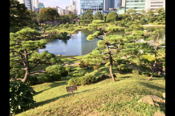 Stroll a beautiful Japanese garden and taste sake in Tokyo - 0