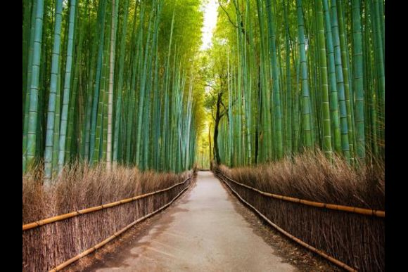 See the morning freshness of Kyoto in an early bird tour - 0