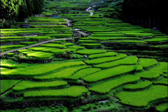 One day cycling tour around terraced rice fields near Nagoya - 0