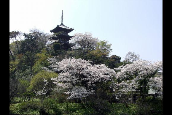 Visit Sankeien Garden in Yokohama - 0