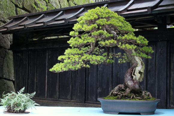 Visit the Bonsai Museum and Railway Museum in Omiya, Saitama - 0