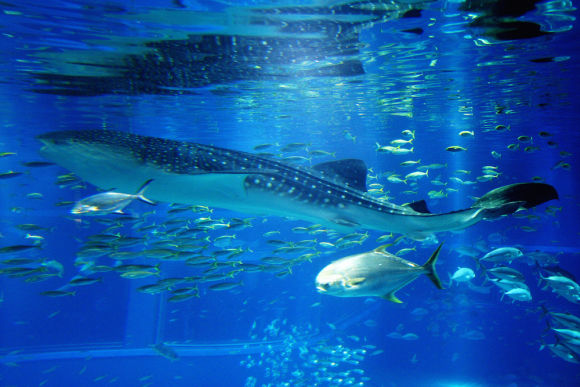 Interact with Sea Animals in Kamogawa Sea World, Chiba! - 0