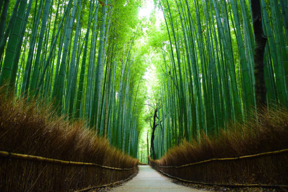 Join Kyoto Arashiyama Bamboo and Tenryu-ji Private Tour - 0