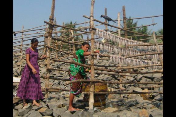 The Sea and We: Koli Culture in Bombay - 3