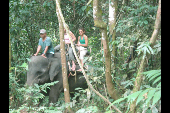 Orangutan & Elephant Trek with Camping - 1