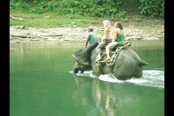 Orangutan & Elephant Trek with Camping - 2