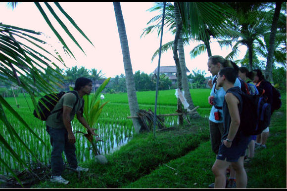 Learn About, Find, and Pick Healing Herbs in Bali - 0