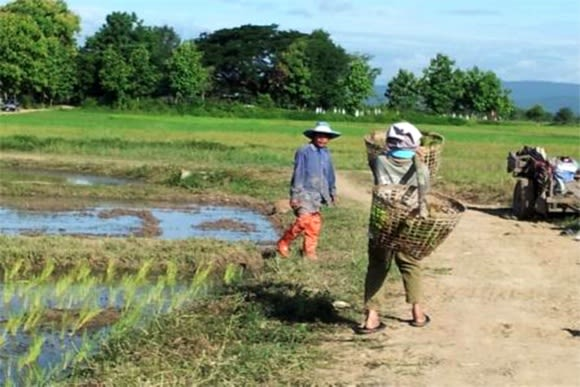 Get a hands-on farming experience in Thailand - 0