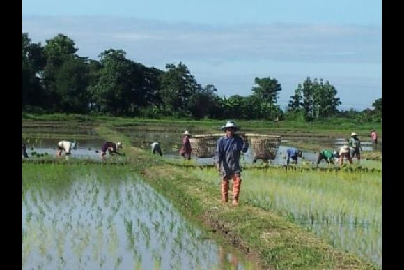Get a hands-on farming experience in Thailand - 1