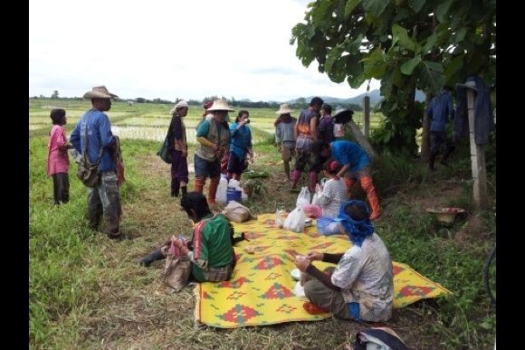 Get a hands-on farming experience in Thailand - 2