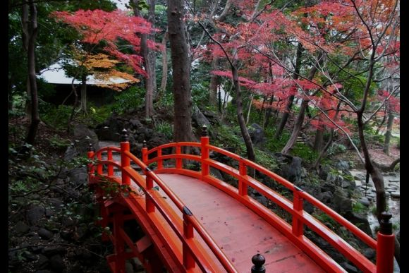 Photo Tour: Enjoy Photographic Scenic Beauty in Tokyo! - 0